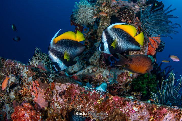 Ilha de Bali, Indonésia