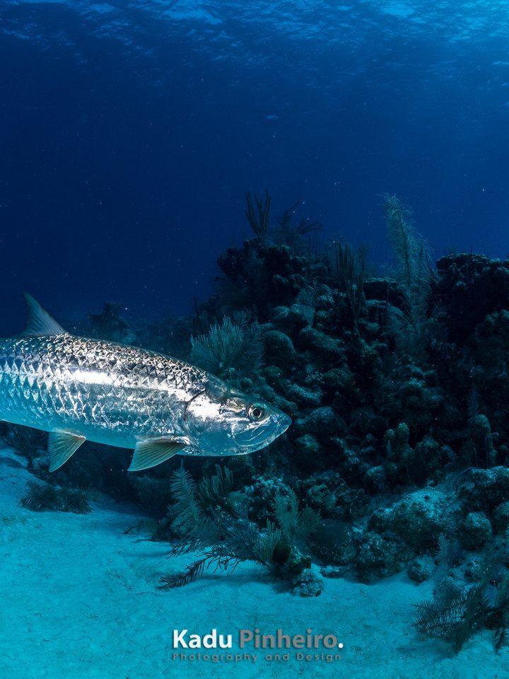 Belize, Caye Calker